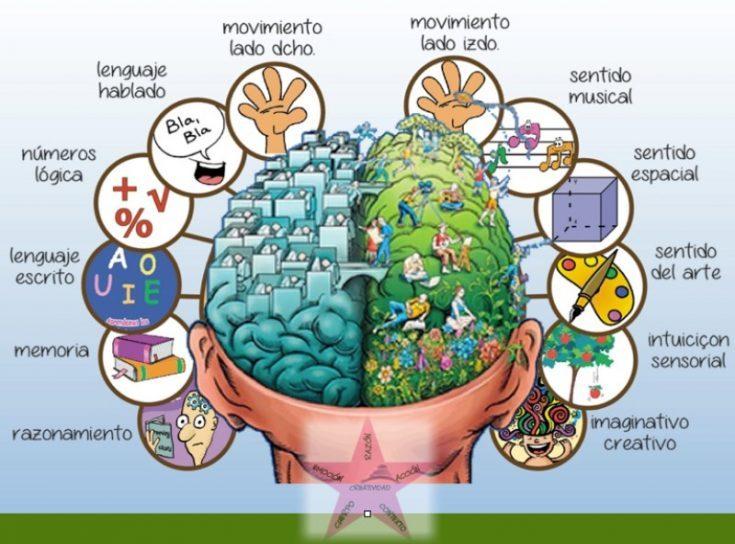 hemisferios-cerebrales-735x544