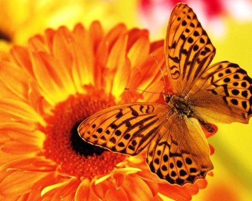 fondos-de-mariposas